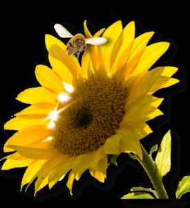 Ein Insektenhotel kaufen ist mit unserem Ratgeber relativ leicht.